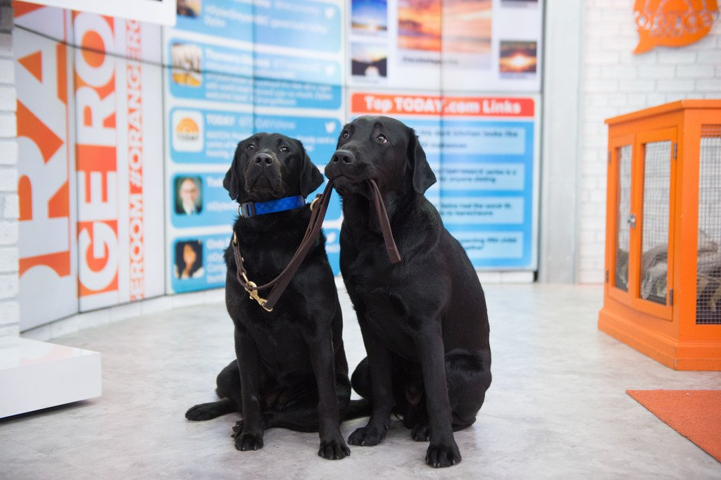 Hangin\' with my sis, Java! #TODAYPuppy