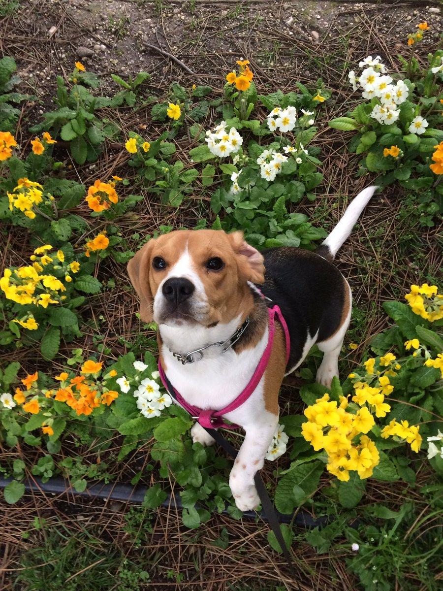 Cette photo pour fêter le printemps ! #spring #printemps #dogsoftwitter <br>http://pic.twitter.com/G3wc1220Jz
