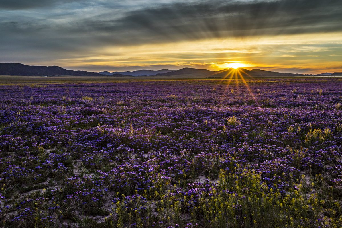 Happy #firstdayofspring! Wildflowers at Carrizo Plain National Monumen...