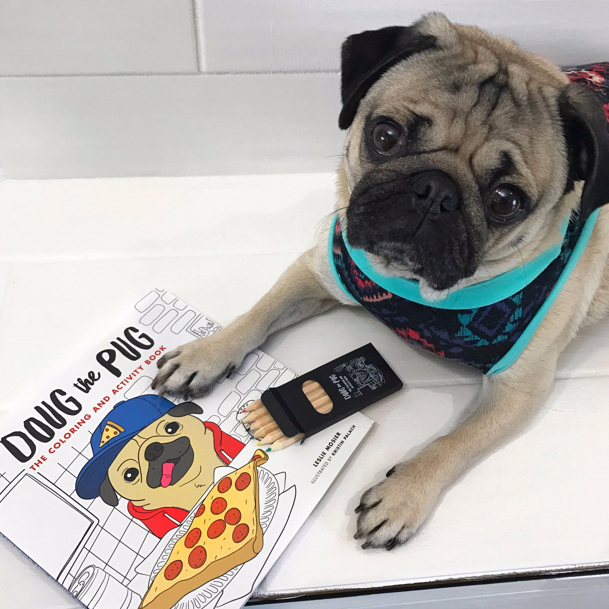 doug the pug book doug the pug on twitter quot leave me alone i m coloring 9124