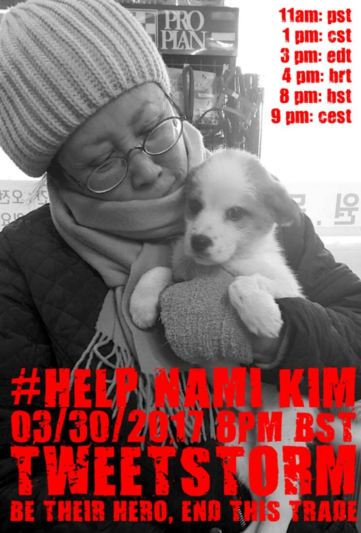 ⚡TWEETSTORM #HelpNamiKim⚡ANGEL OF THE DOGS IN #SOUTHKOREA⚡MARCH 30⏰8pm BST SHARE THIS PAGE➡
