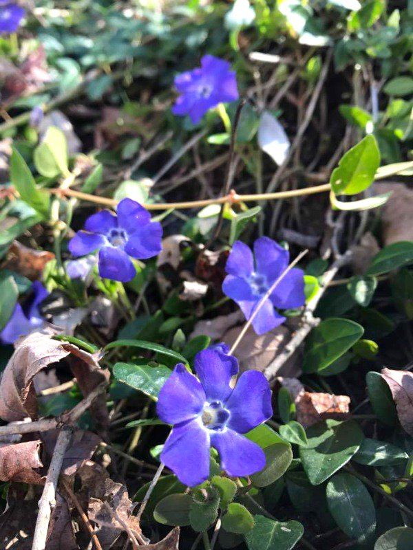 Happy first day of #spring!  https:// goo.gl/6kVyvP  &nbsp;   #ontheblog <br>http://pic.twitter.com/vZKMIldVrS