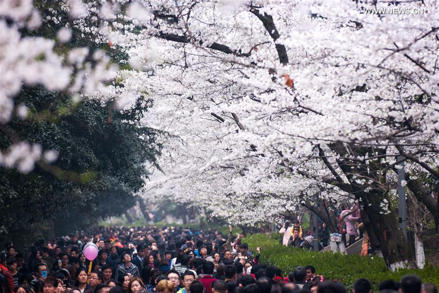 #WuhanUniversity, famous for its beautiful #cherryblossoms, becomes one of the most popular destinations for tourist in China during spring.<br>http://pic.twitter.com/MnEA9MyKx3