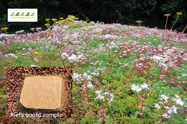 A lightweight and organic solution for your #green #roof project? Request a Riefa brochure:  http:// bit.ly/2h56OMF  &nbsp;   #gardens #architecture<br>http://pic.twitter.com/WeJb4EAvAG