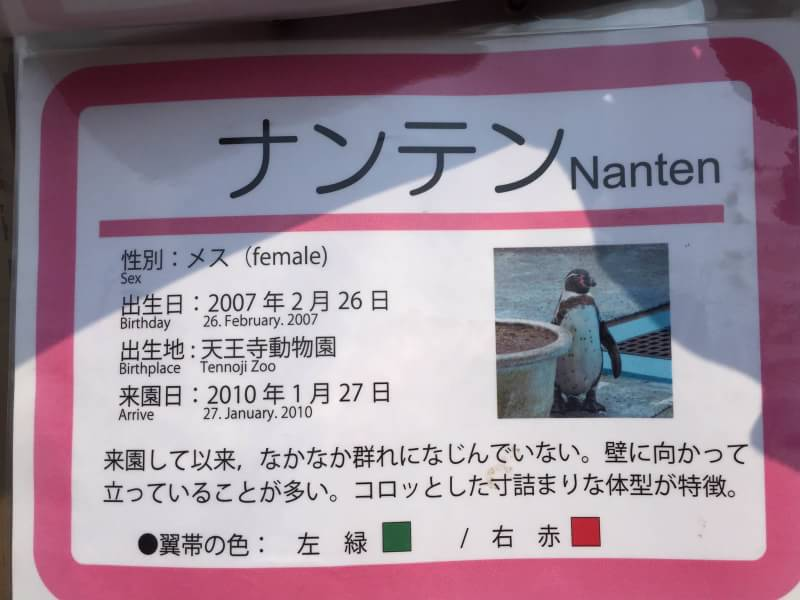 京都動物園のペンギンの ナンテンに勝手に共感してる https://t.co/pS7I8dYQor