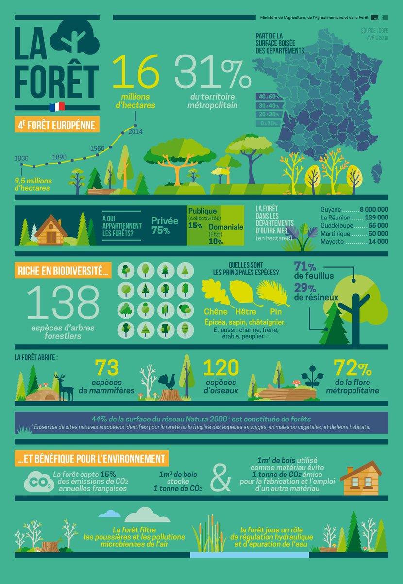 #JIF2017  C&#39;est la Journée internationale des forêts &gt; la #forêt  en une infographie &gt;&gt;  http:// infographies.agriculture.gouv.fr/post/143582726 207 &nbsp; …  #IntlForestDay<br>http://pic.twitter.com/2CLZ94FkQV