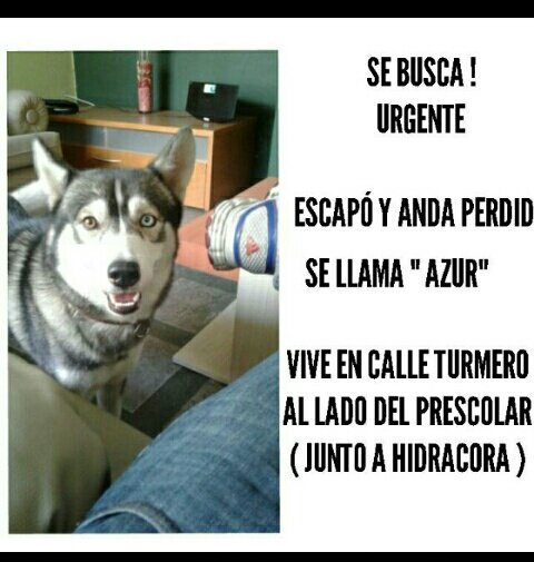 Retweeted PerroUsuario Wof &#39;•&#39; (@PerroUsuario):  #SeBusca RT @chinachef10: @PerroUsuario <br>http://pic.twitter.com/RYv8IBfQyE  http:// fb.me/a9UWGyCCJ  &nbsp;