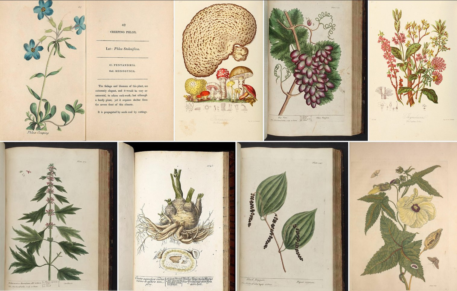 🌿 @BioDivLibrary features scientists who were artistically savvy for a #5WomenArtists & #5WomenScientists crossover! https://t.co/gryEa3BHZK https://t.co/841mWpuqHx