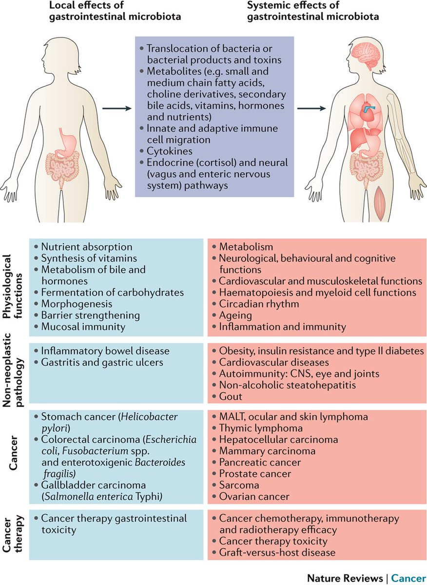 Another great relevant review => Microbiota: a key orchestrator of cancer therapy https://t.co/9CDeQEptrA https://t.co/xX5OMT7Dsi