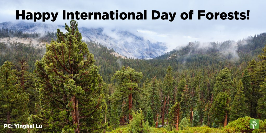 It&#39;s #InternationalDayofForests! We are so thankful for all the benefits #forests provide — that&#39;s why it is so important to protect them! <br>http://pic.twitter.com/LTJ0xFnOZL