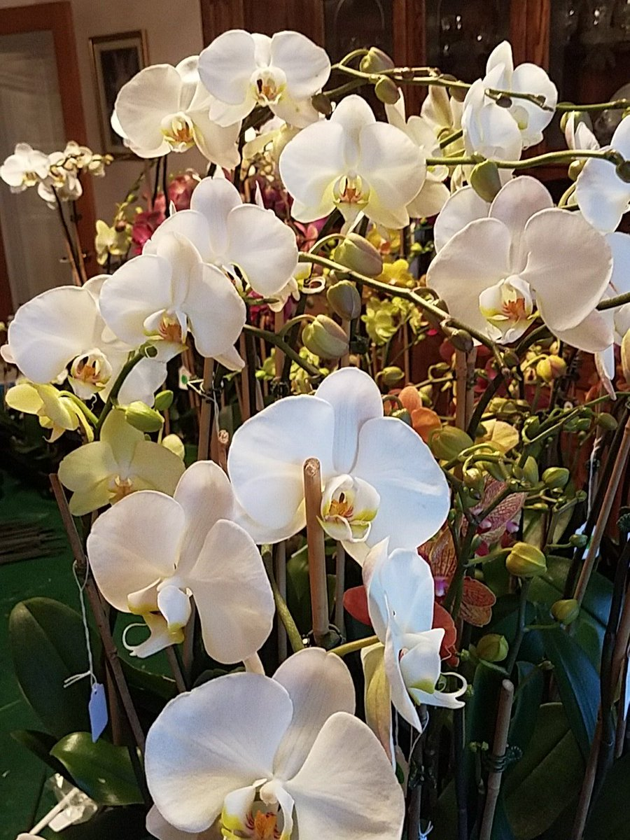 Count Down For The BOISE FLOWER AND GARDEN SHOW, This Week End. MARCH 24  Thru 26TH, BOISE CENTRE ON THE GROVE STOP AND SEE THE  ORCHIDS.pic.twitter.com/ ...
