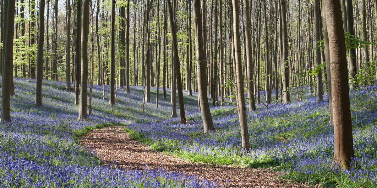 10 of the best woodland walks in the UK for International Day of Fores...