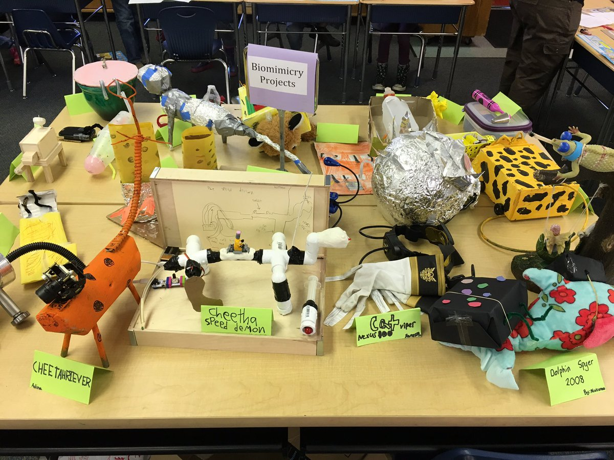 An Engineering Project About Biomimicry In 3rd Grade Students Created Awesome Projects An Added Rainbow Bonus Https T Co Ro9wkrtnsz