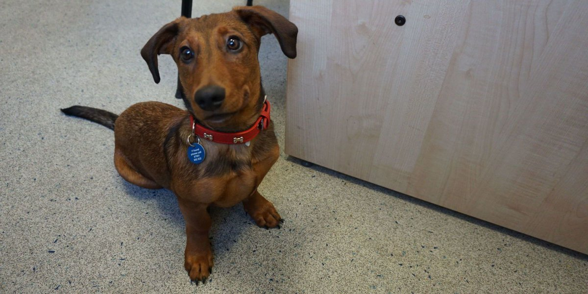 Meet Bob the deaf dachshund who's learning sign language to help him b...