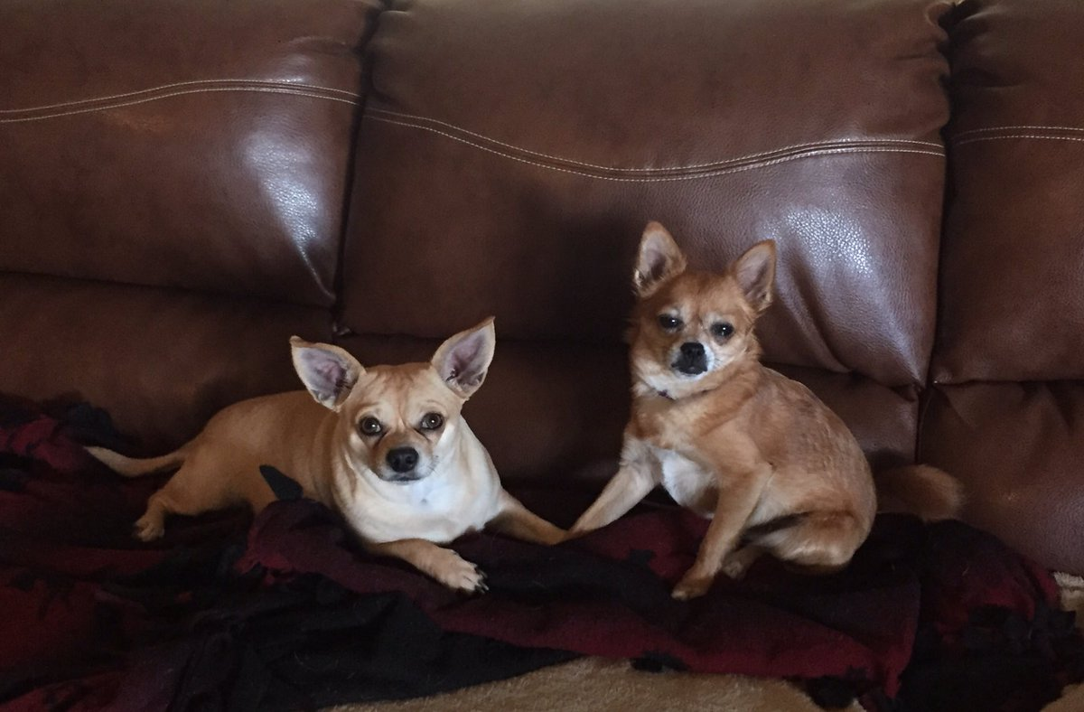 Double trouble #dogsoftwitter <br>http://pic.twitter.com/vpfQT8WbkJ