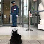警備員と猫の戦い警備員の勝利みたいです!