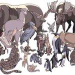 実際の動物とけものフレンズのキャラ達と比較したものがこれ!