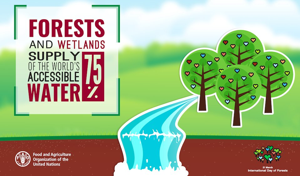 Happy #WorldWaterDay ! Did you know that #forests supply 75% of the world's accessible fresh water?  http:// bit.ly/1Pqh2NO  &nbsp;   #ForestH2O<br>http://pic.twitter.com/Nplt9lx2W2
