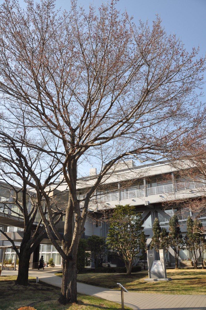 市役所 東松山