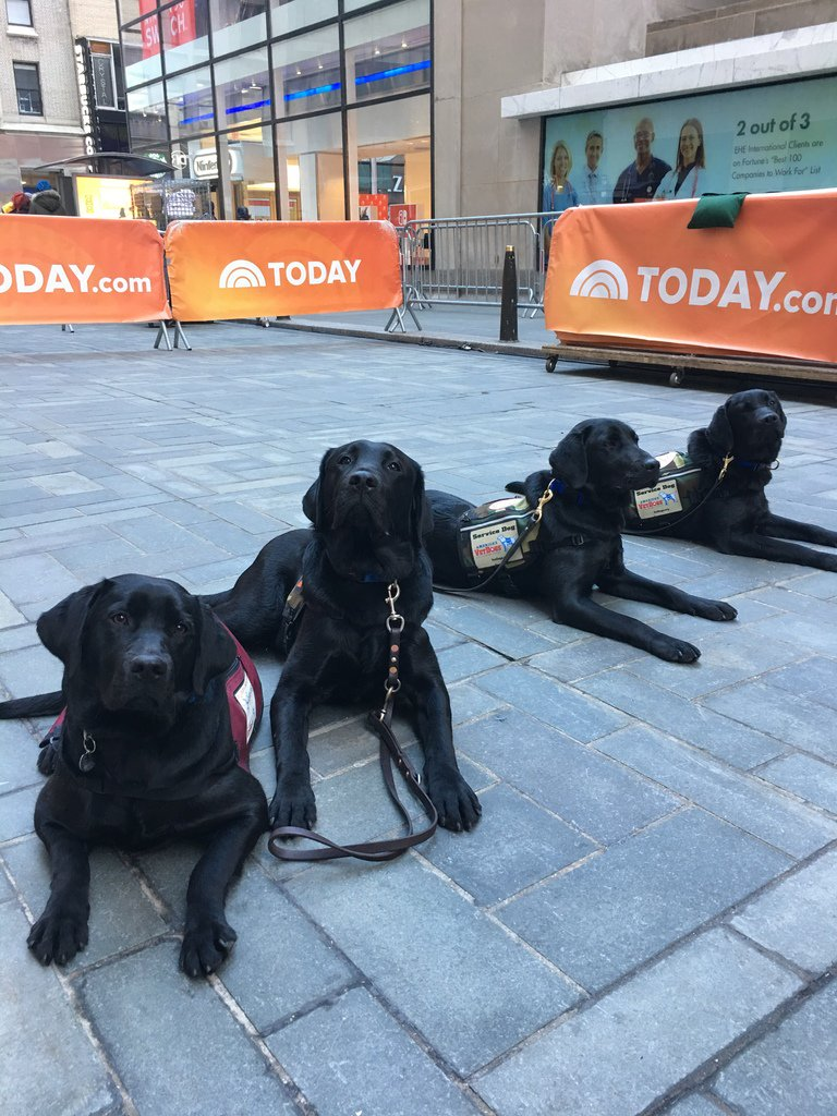 My sisters came to visit! Can you guess which one I am? #TODAYPuppy