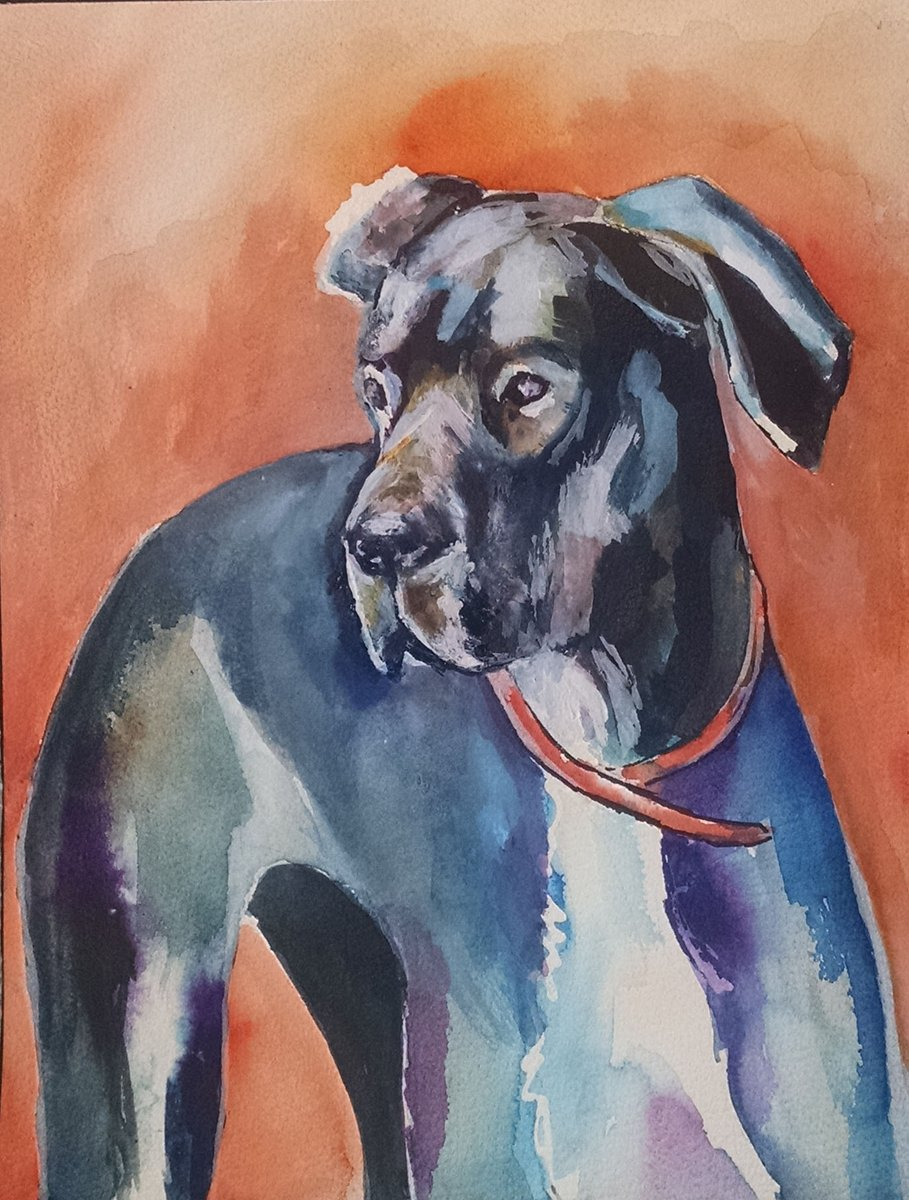 Order a pet portrait   http:// etsy.me/1ZEOAh0  &nbsp;     #wnukrt #womaninbiz #greatdanes #woofwoofwednesday #87rt #uksopro #wetnosewednesday #flockbn<br>http://pic.twitter.com/qPNLDUaT1v