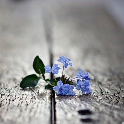 لرُبما ينتظرك شيئاً أحبُ إليك مما فقدت!! لعلها خيرة....🌹   #شيي_تمنيته...