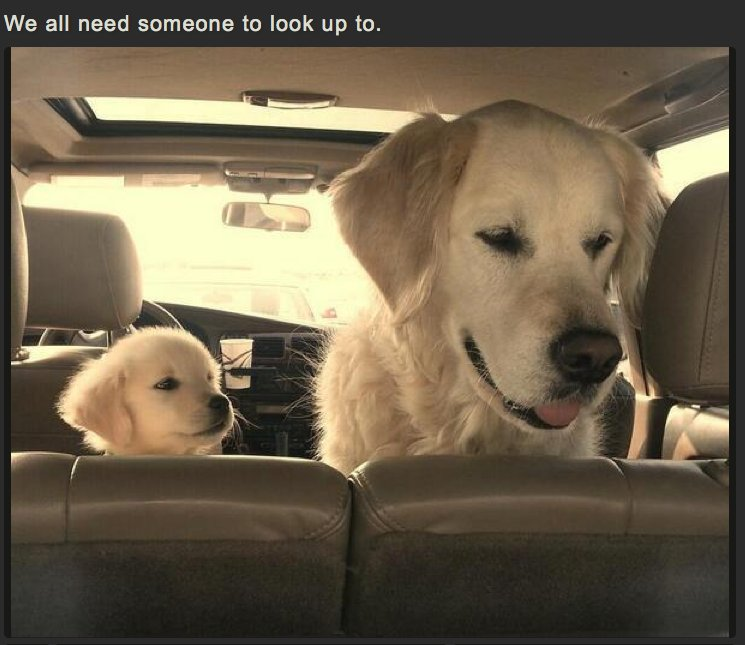 We all need someone to look up to!  #dogs #pets #animals #dogsoftwitter