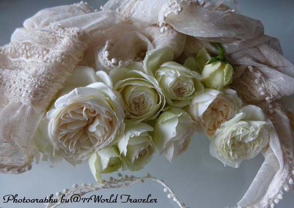 My little gardens Roses Beautiful#Roses https://t.co/mGlKET7Ugj by #b...