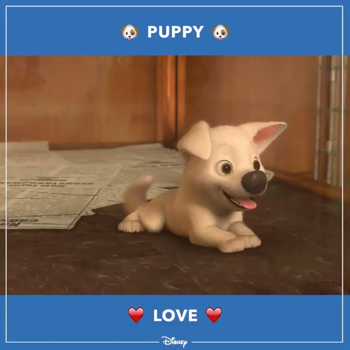 Happy #NationalPuppyDay!! 🐶❤️ https://t.co/ouYKZKBRSA