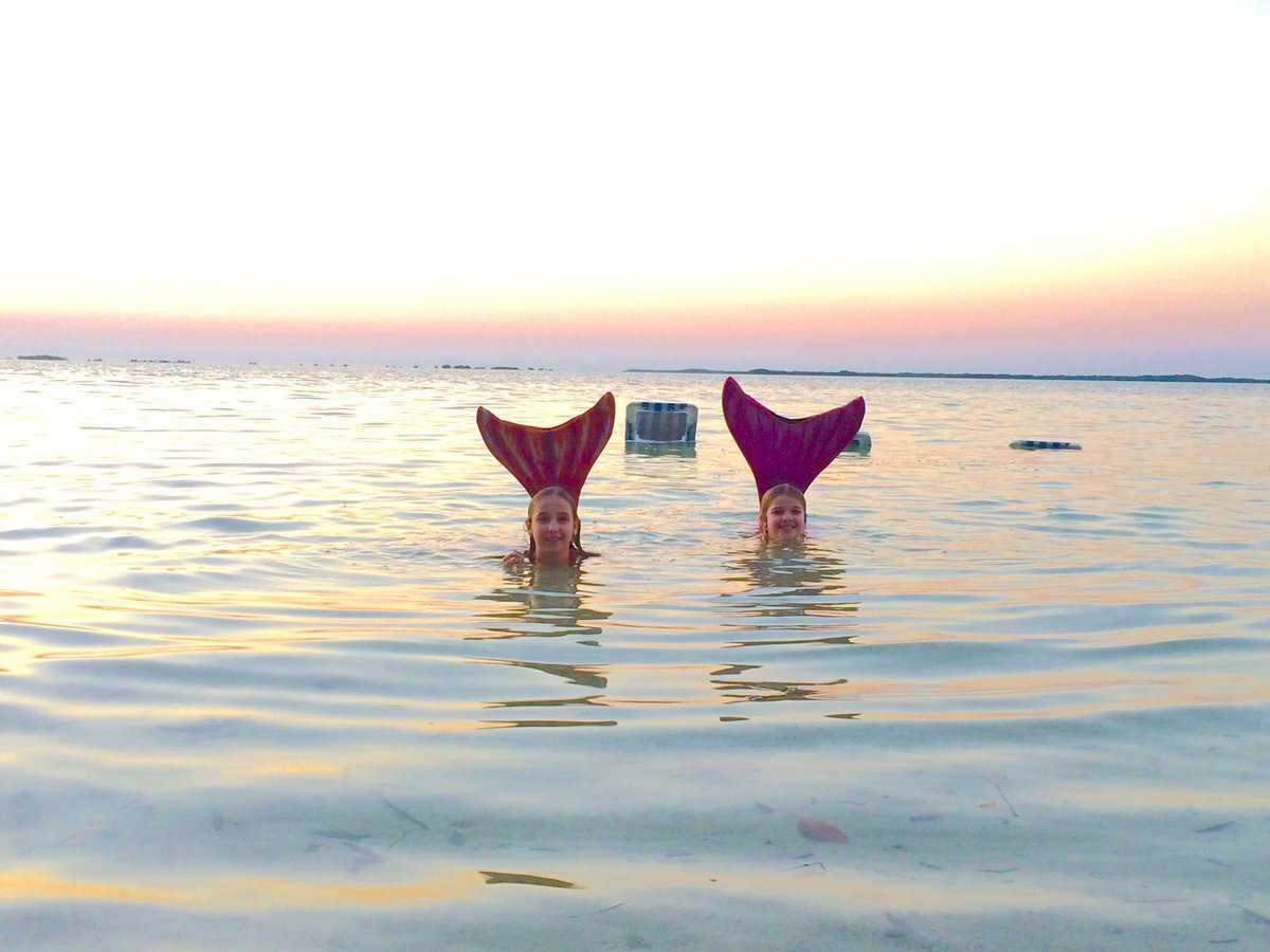 Our newest marine life visits #Hiltonkeylargo #Mermaids   #sunsetflkeys  #caribbeanwatersports #enviro-tours #flkeys<br>http://pic.twitter.com/mIsEmHSUwK &ndash; à Hilton Key Largo Resort