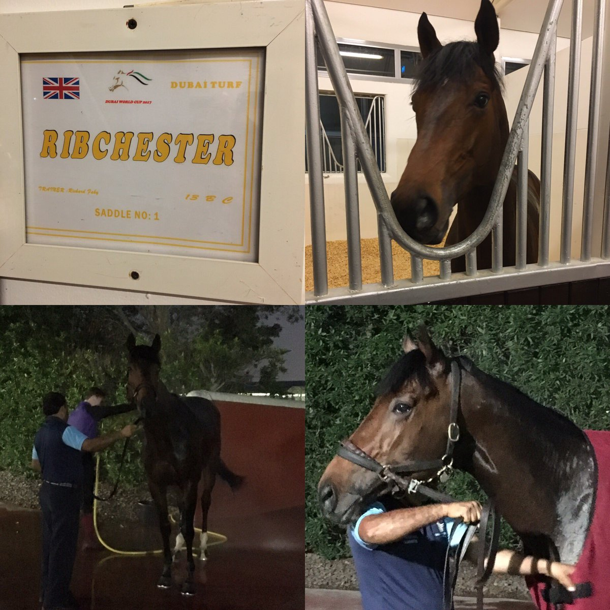 Our lad Matt & his Dubai groom Davey are doing a great job looking after him #Ribchester