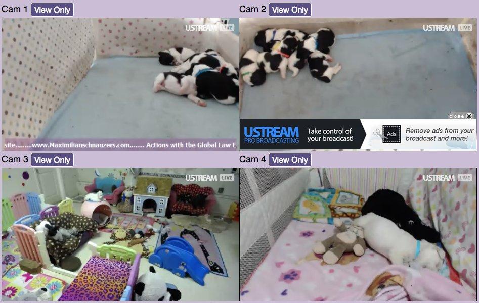 Livepuppycam com
