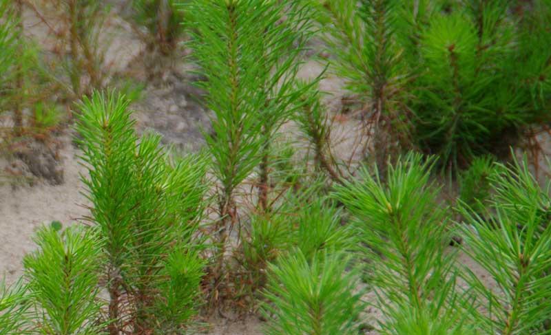 «Reconnaître le #reboisement comme une grande cause nationale» (FNEDT)  http://www. forestopic.com/fr/en-bref/552 -reboisement-cause-nationale-fnedt &nbsp; …  #forêt #bois<br>http://pic.twitter.com/FSBa25TJpD