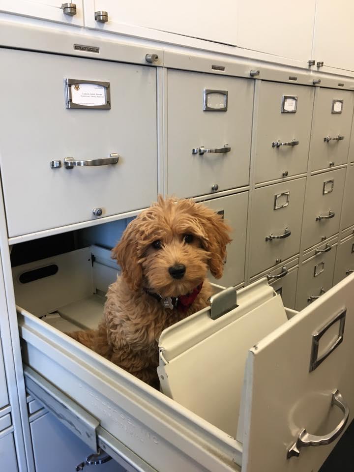 Happy #NationalPuppyDay from my staffer's dog, Reagan.  He's a wonderful addition to the Fleischmann team! https://t.co/NJfLMijYSp