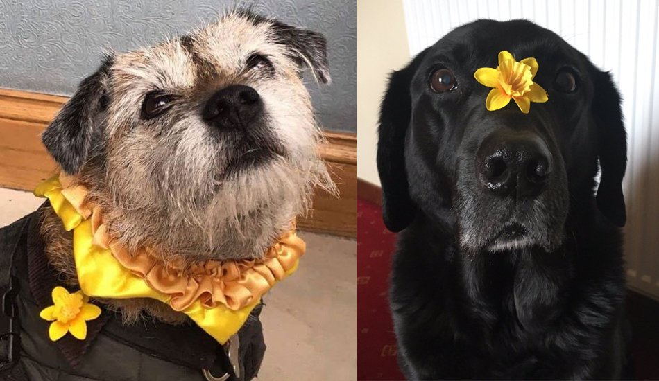 Happy #NationalPuppyDay to our daffodil wearing doggies! https://t.co/...