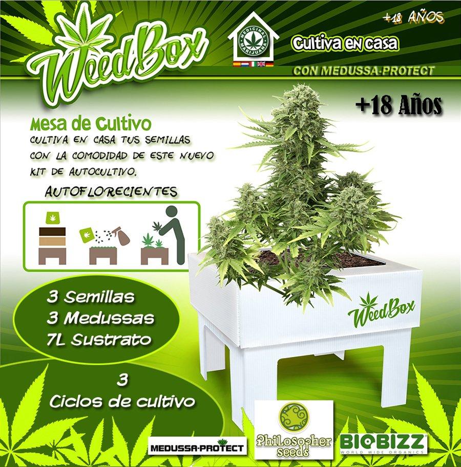 Gollo El Cogollo On Twitter White Yoda Y Weedbox Gran