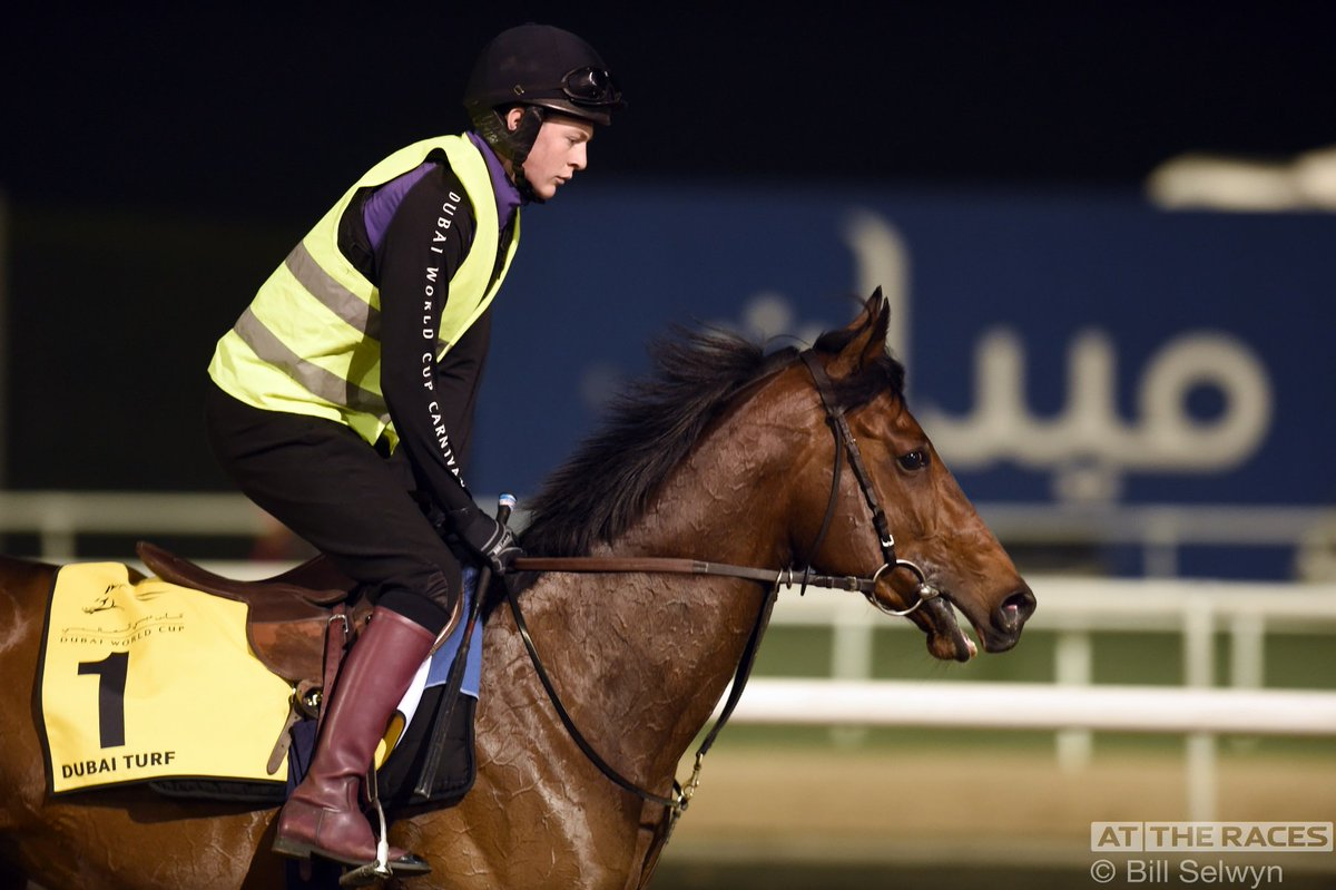 Ribchester limbers up at @DRC_Meydan before Saturday's Dubai Turf tilt for trainer @RichardFahey
