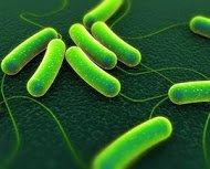 Entre los patógenos transmitidos por alimentos + conocidos está Salmonella, problema especialmente en huevos y ovoproductos #microMOOCSEM2 https://t.co/jTcXdFYWkf