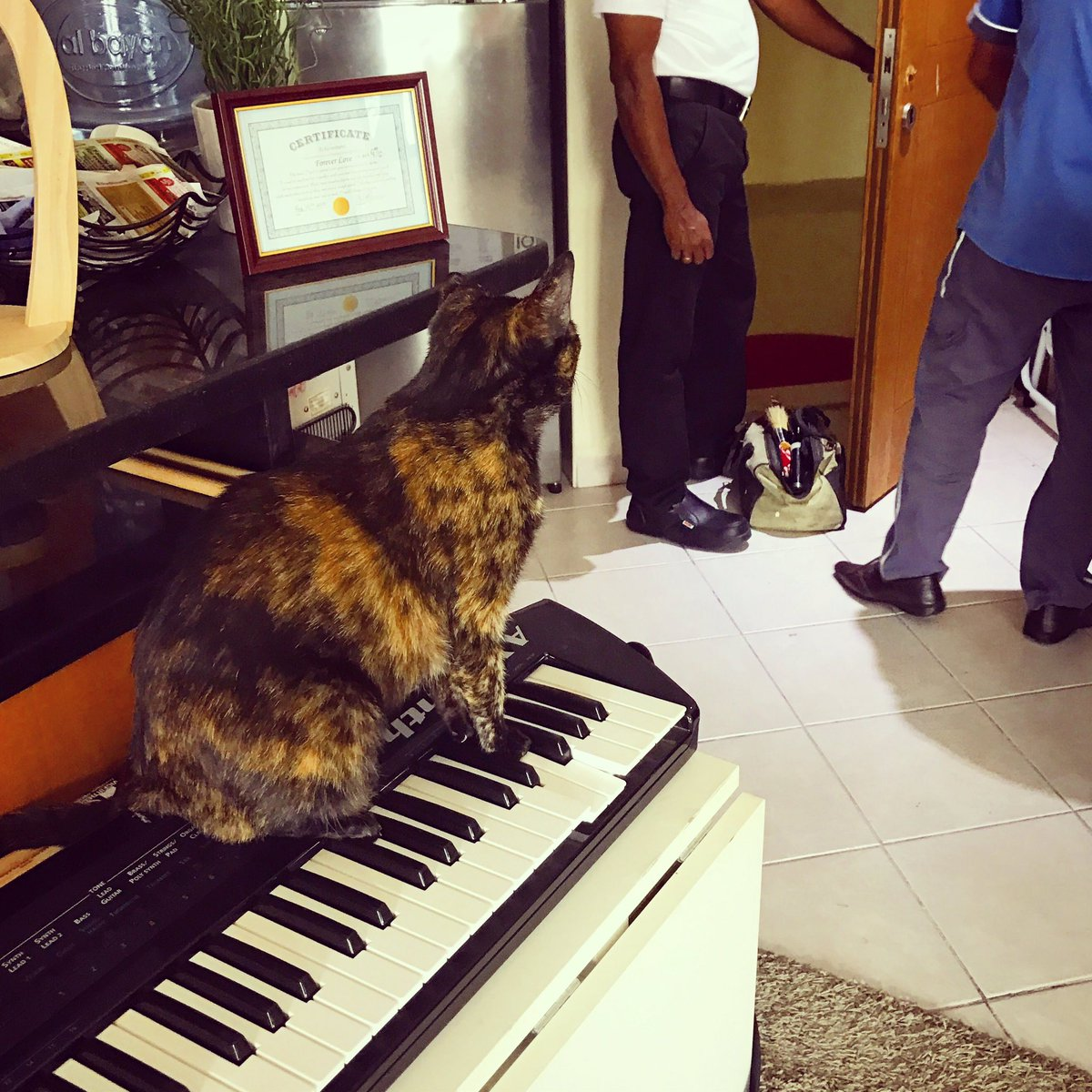 My lock is getting fixed and who&#39;s the bravest of my #cats ? My original rescue kitty #PrincessLeia standing watch on a @Roland_US Ax-Synth!<br>http://pic.twitter.com/5PvqvvUTxL