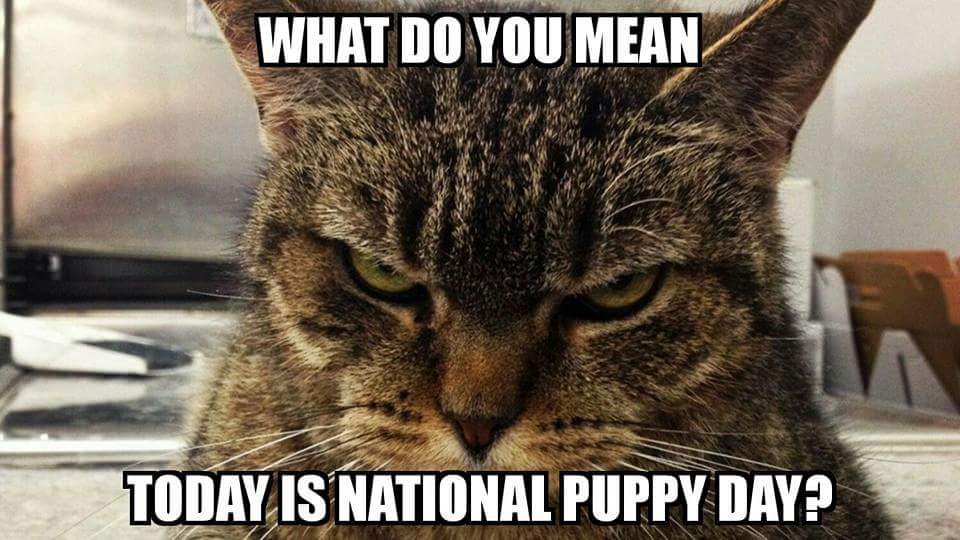Not everyone is excited about #NationalPuppyDay https://t.co/mDNiwTqwd...