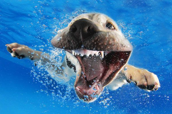 #NationalPuppyDay: These are photos of puppies learning to swim. That...