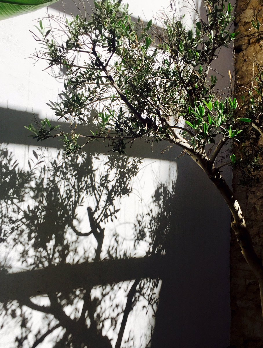 A la sombra del olivo. #interiorismo #diseño #arquitectura #estudio #cosin #valencia #spain In the shadow of the olive tree<br>http://pic.twitter.com/ajmMe5KQCW