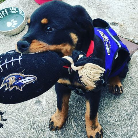 Happy #NationalPuppyDay! 🐶😈  Show us your pups rocking purple using #R...