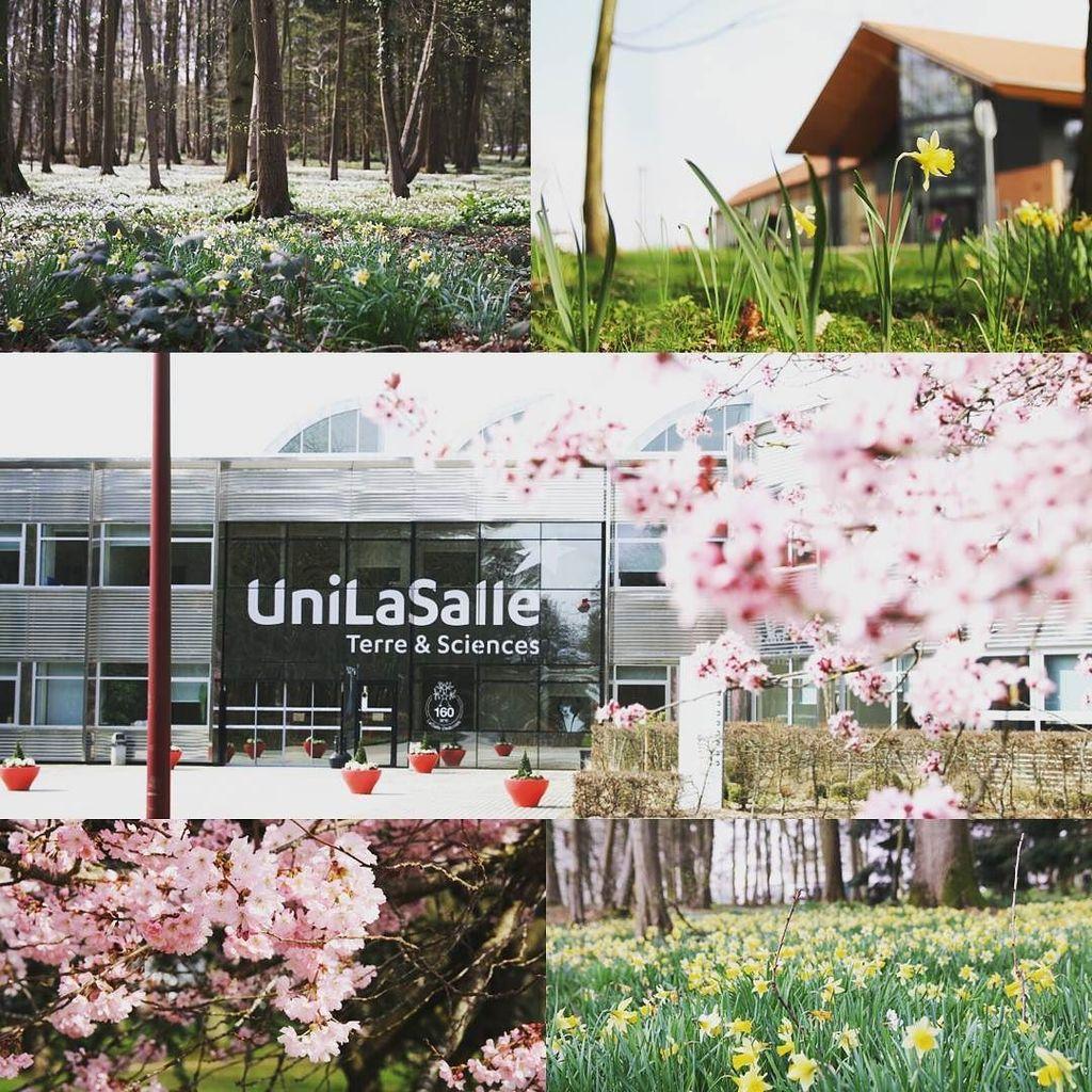 Le printemps est arrivé sur le campus !  Spring has arrived on the campus!  #unilasalle #u…  http:// ift.tt/2mY2m2P  &nbsp;  <br>http://pic.twitter.com/6agtNG8MZX