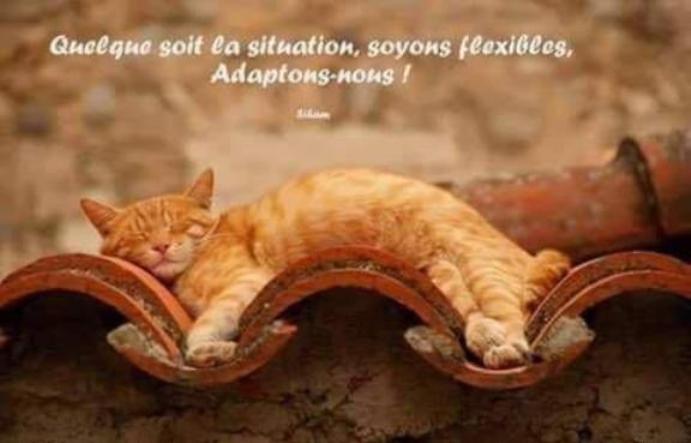 Quelque soit la situation... Soyons flexibles, Adaptons-nous ! #Empathie #Partage #Coeur #Positif #Respect #Vie #ligue_des_optimistes<br>http://pic.twitter.com/XGvo3Oenf8