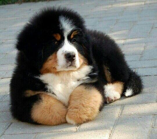 La plus belle chose dans ma vie!  Un amour sans condition! #NationalPuppyDay #love #dogs @DJCandari @KarineKareen @Gabriel_Mann<br>http://pic.twitter.com/0wO1njTelJ