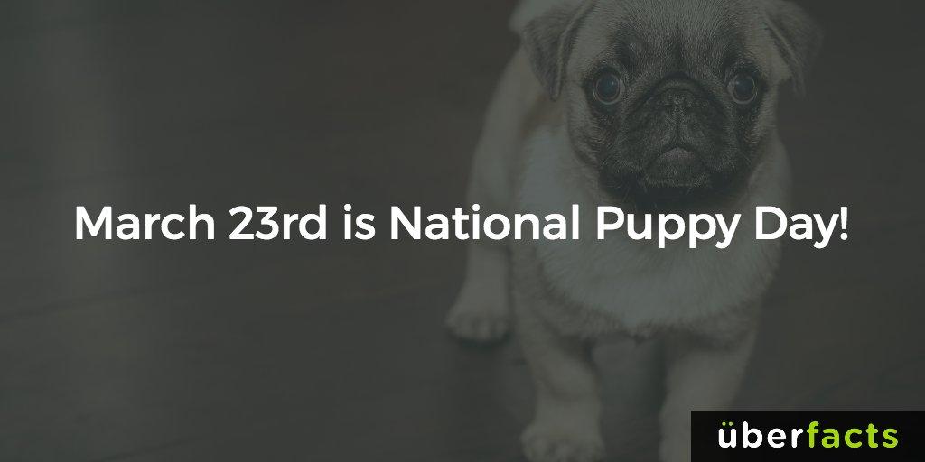 Today is #NationalPuppyDay! https://t.co/kFjAITorDI