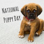 You've got yourself a puppy! Now how do you feed it properly? Find out: https://t.co/rqFxlRsa0w #NationalPuppyDay #PuppyDay #pethealth