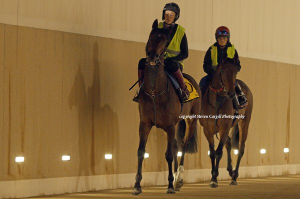 Also getting out in the dark @DRC_Meydan this morning were RIBCHESTER for @RichardFahey @godolphin and POSTPONED for @varianstable