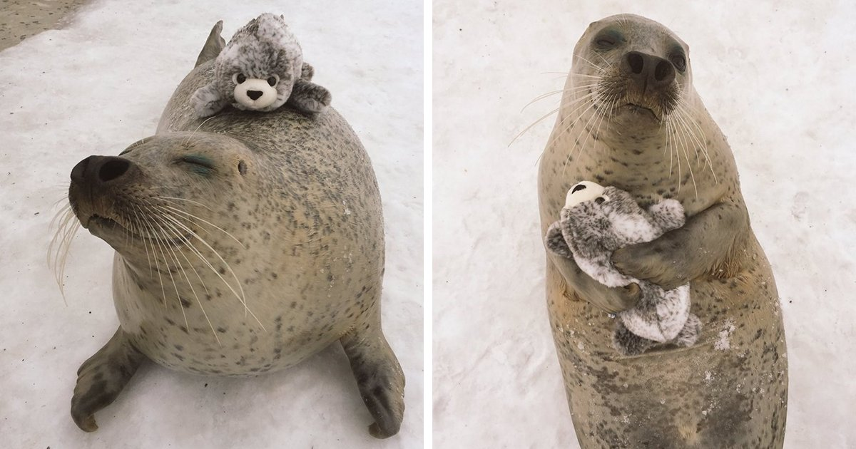 Seal Finds Toy Version Of Itself, Can't Stop Hugging It https://t.co/PnetlKR8aZ https://t.co/LFhQw4b0bQ